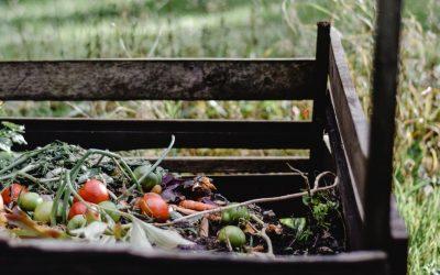 Beneficios directos de compostar en casa 🌾